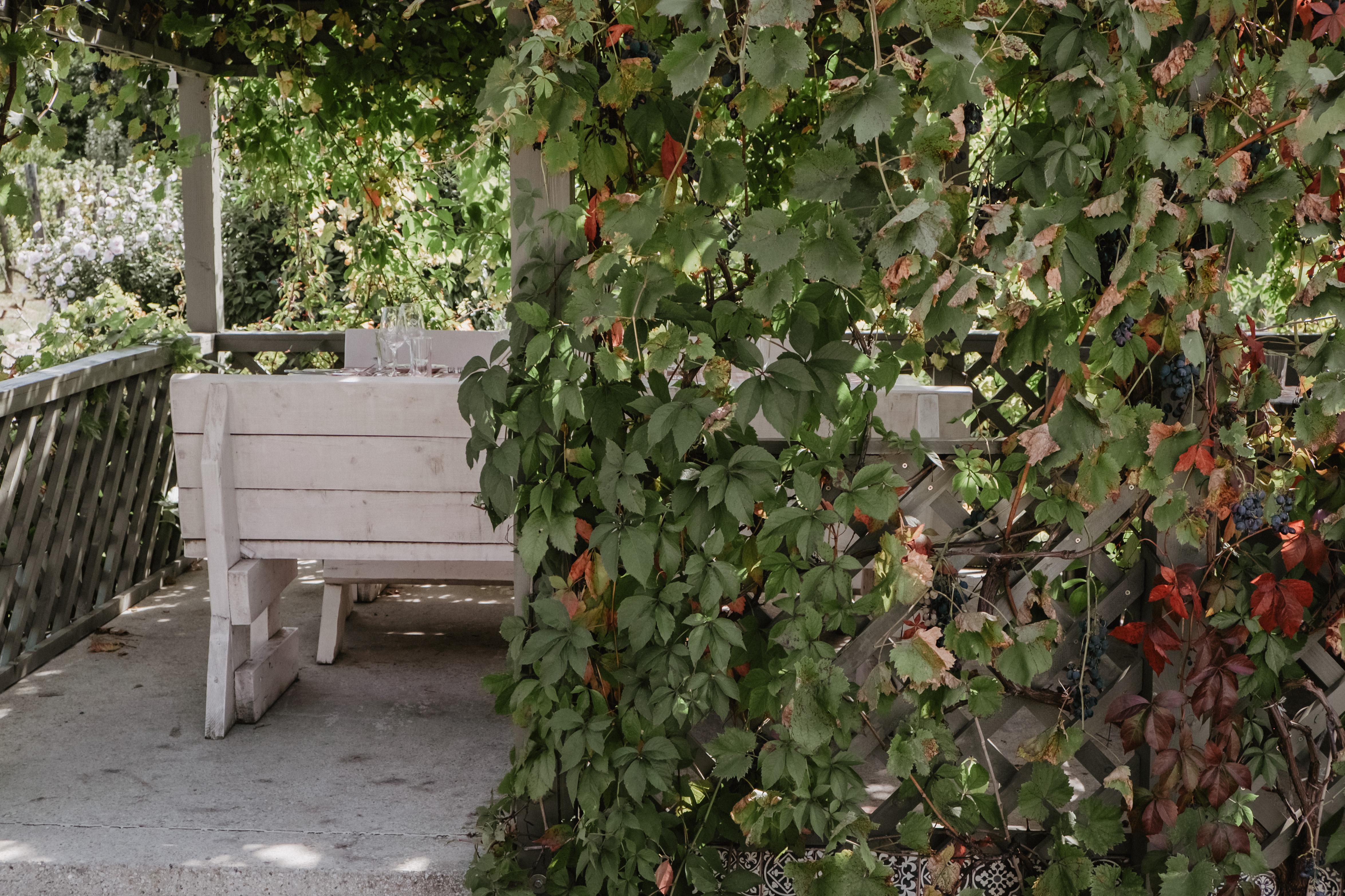 Badacsony ősszel - borkóstolás és szállás